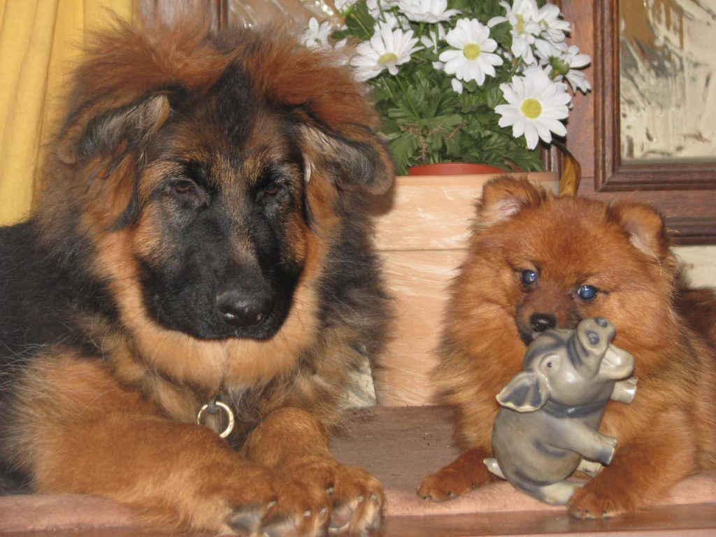 Zassy und Wanja