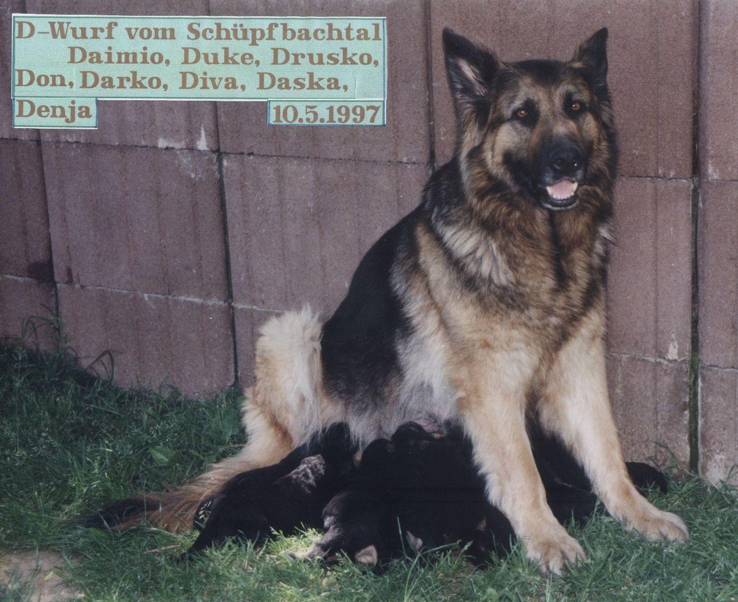 D-Wurf Schüpfbachtal