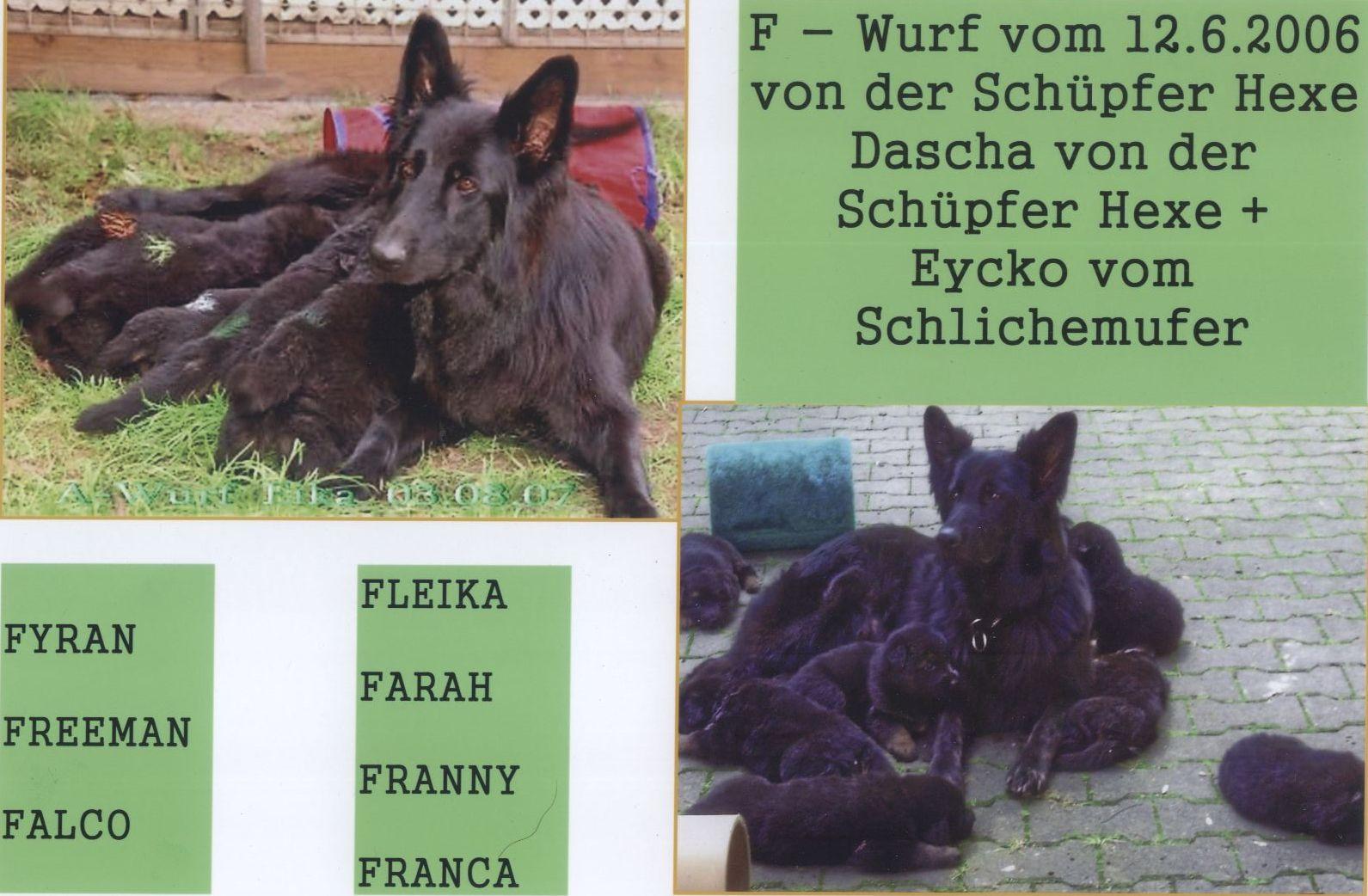 F-Wurf Schüpfer Hexe