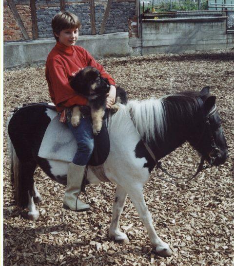 welpe-auf-pferd