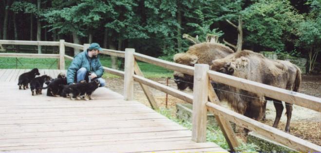 wildpark1